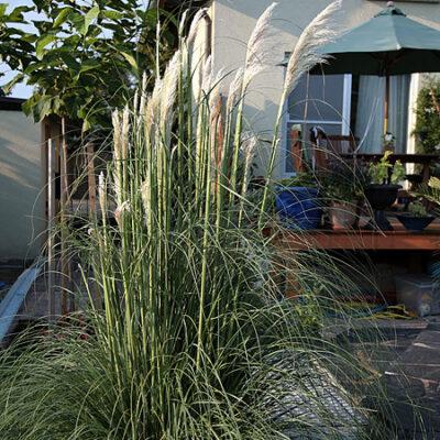 Spinnen und neue Taglilien