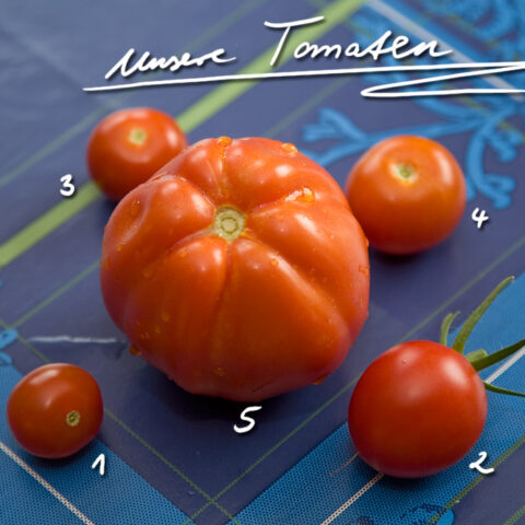 Unsere Tomaten