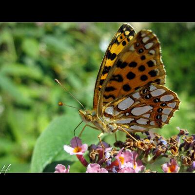 Die Schmetterlinge…
