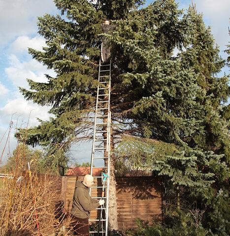 Hoch auf dem Baum…