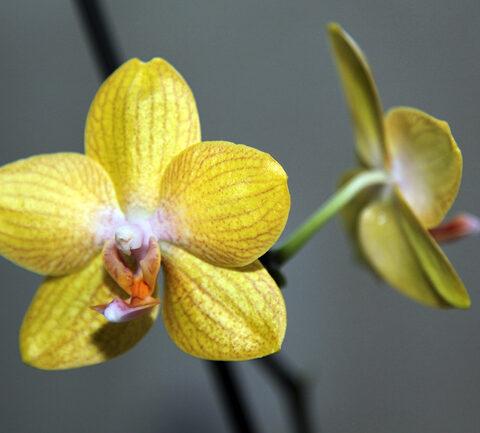 Und noch mehr Orchideen…