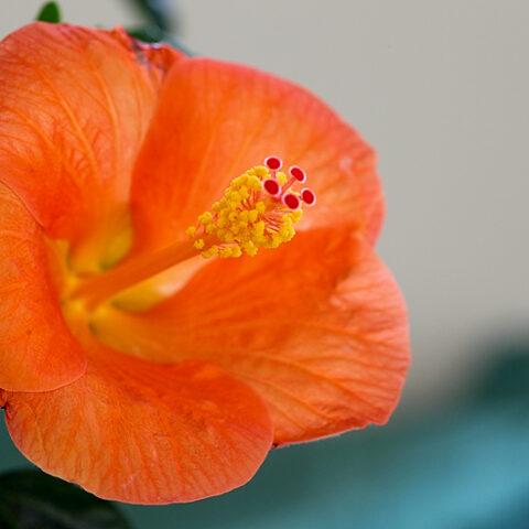 Einkauf bei Floralia