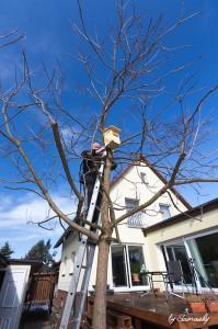 Im Trompetenbaum wird der Kasten befestigt