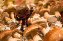 Wer will fleißige Pilzsammler seh'n?