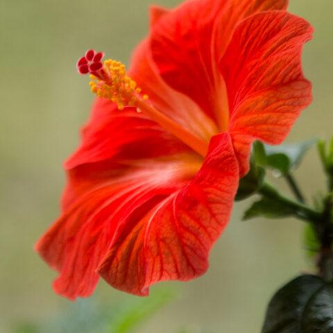 Garten und Haus wollen Frühling bekannt geben…