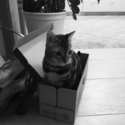 Katze in der Kiste