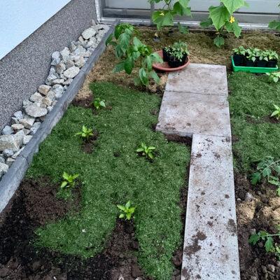 Gewächshaus bepflanzt