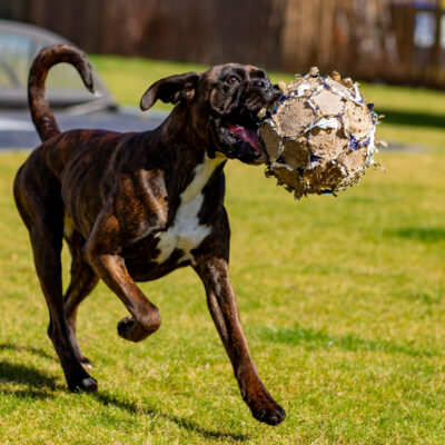 Onya und ihr Ball