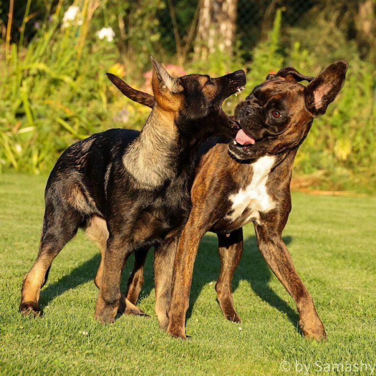 So sehen glückliche Hunde aus